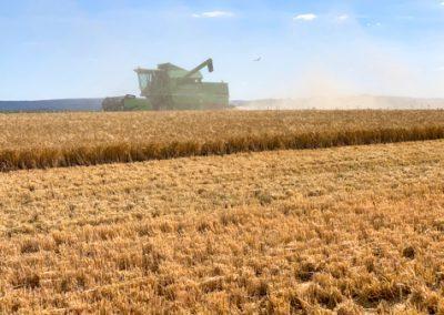 Strohbergung und Getreideernte