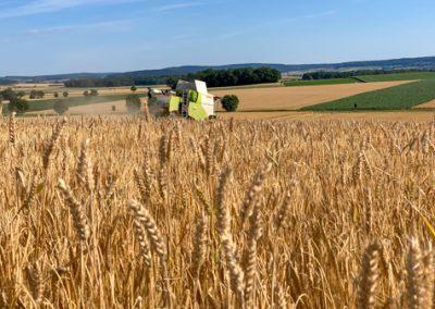Getreideernte: Mähdrescher