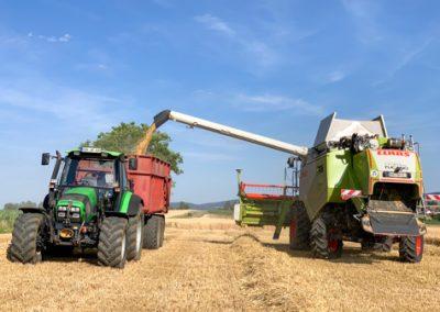 Getreideernte: Mähdrescher und Traktor
